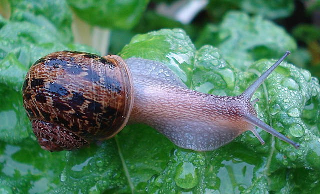 13 Jun Slugs and snails, how to get rid of these plagues…